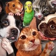Schaltfläche, um zu den Tierbedarf Online Shops zu gelangen